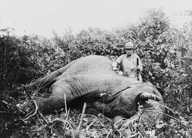 Teddy Roosevelt with large-caliber rifle and dead elephant