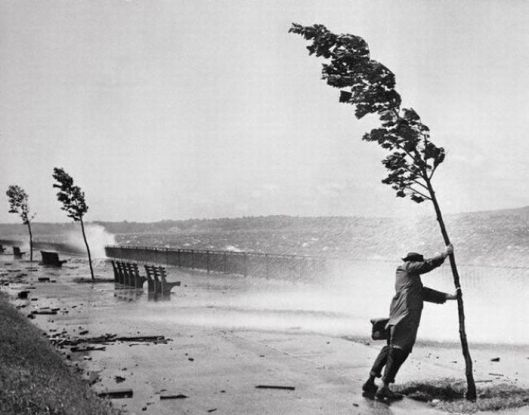 31 Aug 1954, Brooklyn, New York, New York, USA --- A passerby holds on to a tree for support as hurricane swept waves hammer the sea wall adjacent to the Belt Parkway near 72nd Street in Brooklyn. The New York area and the New Jersey coastline were battered by Hurricane Carol as heavy rains and fierce winds disrupted power lines, felled trees and tangled air and highway traffic. The eye of the hurricane, which originated in the Caribbean, passed the Hamptons on Long Island. An estimated 175,000 persons were left without light and telephone service and thousands of persons evacuated summer bungalows along the southern shore. Gusts of 60 mph were reported in New York City, and 48,000 homes were without electricity. --- Image by © Bettmann/CORBIS